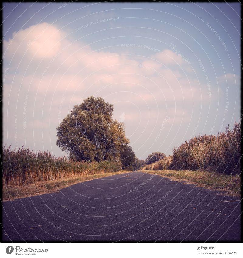 landpartie Himmel Baum Ferien & Urlaub & Reisen Pflanze Sommer Wolken Einsamkeit Umwelt Landschaft Straße Feld Ausflug Idylle Straßenbelag gerade ländlich