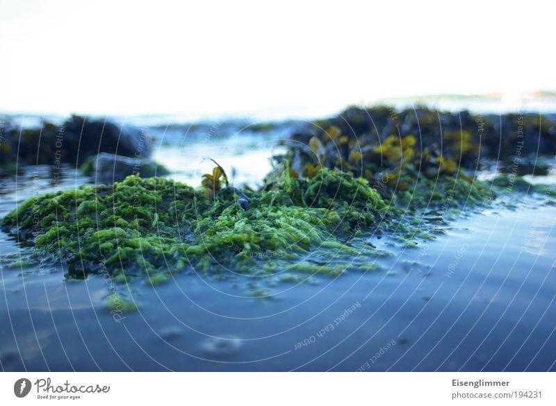 Wasser, Sonne, Seetang... Natur Pflanze Himmel Sommer Wellen Küste Strand Bucht Ekel Flüssigkeit hässlich blau weiß Einsamkeit Idylle Klima Mittelpunkt Umwelt