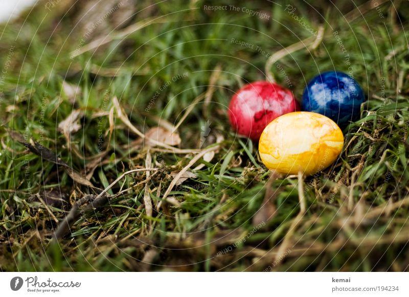 Ostereier Lebensmittel Ei Eierschale Ernährung Umwelt Natur Pflanze Erde Frühling Gras Blatt Grünpflanze Ostern Osternest blau gelb grün rot 3 Farbfoto