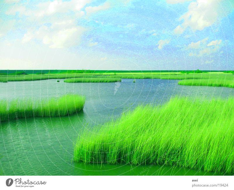 In weiter Ferne so nah Wasser Meer See Schilfrohr Deich Biotop