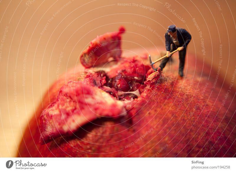 Fleischwunde Mensch rot Ernährung Arbeiter Arbeit & Erwerbstätigkeit klein Lebensmittel maskulin groß Frucht Kernobst Baustelle Apfel außergewöhnlich Werkzeug