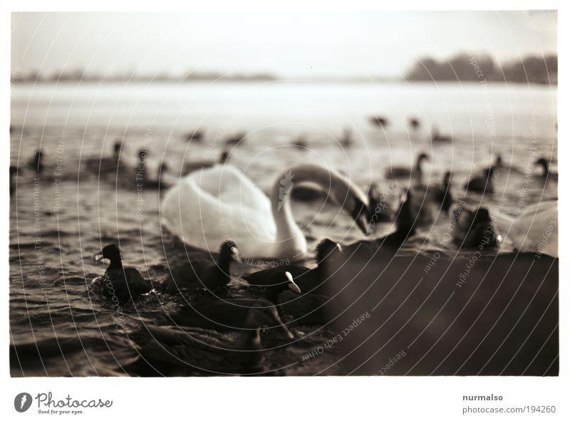 Fütterung II Natur Wasser Pflanze Tier Winter Landschaft dunkel Vogel Kunst Schwimmen & Baden Wellen Wetter Klima Tierpaar Freizeit & Hobby Insel