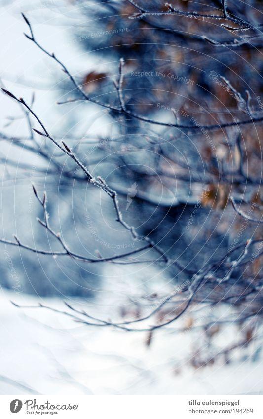 blau Natur Pflanze Winter Blatt Einsamkeit Farbe dunkel kalt Schnee Umwelt Ausflug Sträucher Klima wild