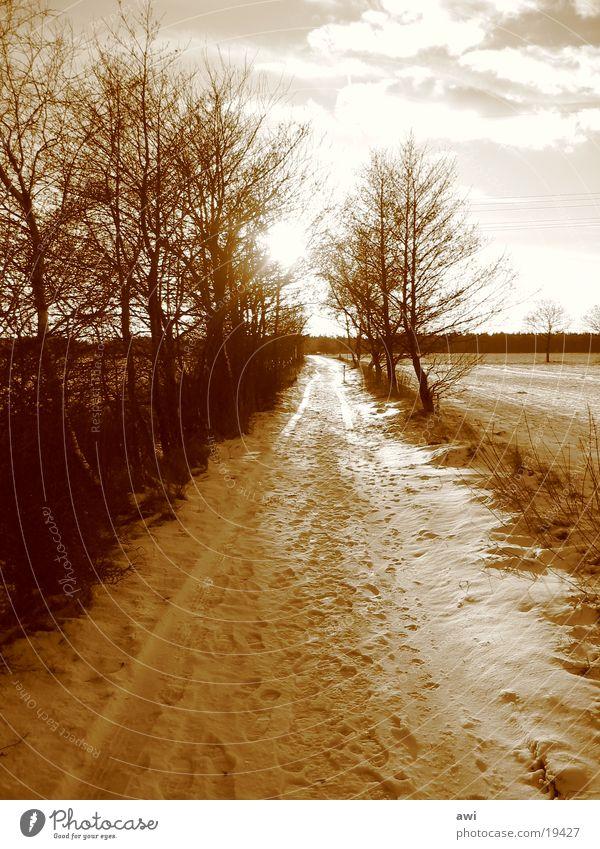 Yol Baum Schnee Wege & Pfade Landschaft Ostfriesland
