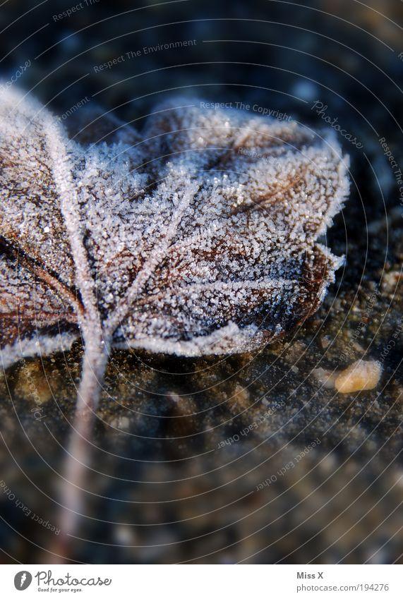 Zucker Herbst Winter Eis Frost Blatt dunkel kalt Raureif Farbfoto Gedeckte Farben Außenaufnahme Nahaufnahme Makroaufnahme Menschenleer Textfreiraum unten