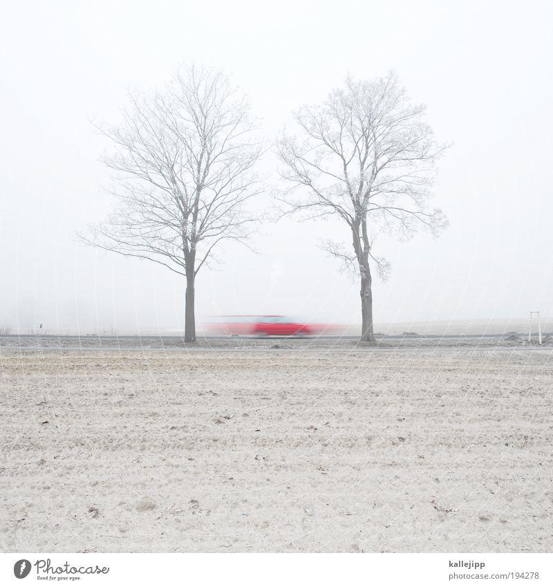 saisonauftakt Baum Pflanze rot Winter Straße Wege & Pfade PKW Sand Landschaft Feld Straßenverkehr Nebel Umwelt Verkehr Erde Geschwindigkeit