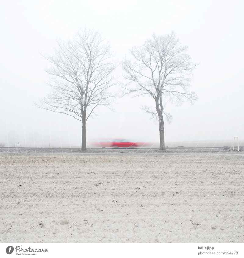 saisonauftakt Umwelt Landschaft Erde Sand Nebel Pflanze Baum Feld Verkehr Verkehrsmittel Verkehrswege Personenverkehr Straßenverkehr Autofahren Wege & Pfade