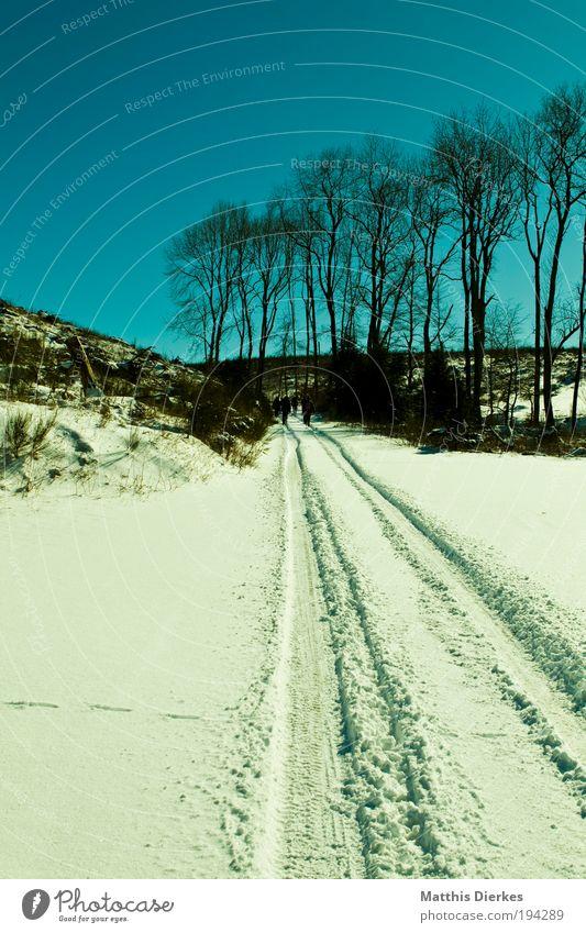 Winter-Wanderung Baum grün Pflanze Wald kalt Eis ästhetisch Frost Kitsch Unendlichkeit gigantisch Landschaftsformen Natur