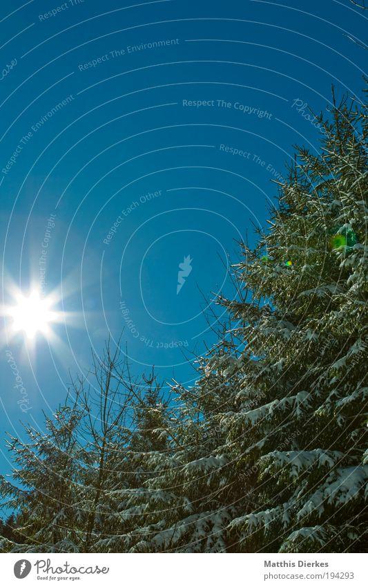 Nadelwald Natur schön alt Baum grün Pflanze Wald Landschaft Umwelt ästhetisch Klima viele Originalität Wolkenloser Himmel