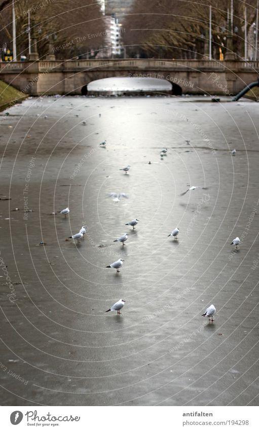 Schaulaufen Natur Wasser weiß Baum Winter Tier Straße Erholung grau Park Eis braun Vogel fliegen sitzen Brücke
