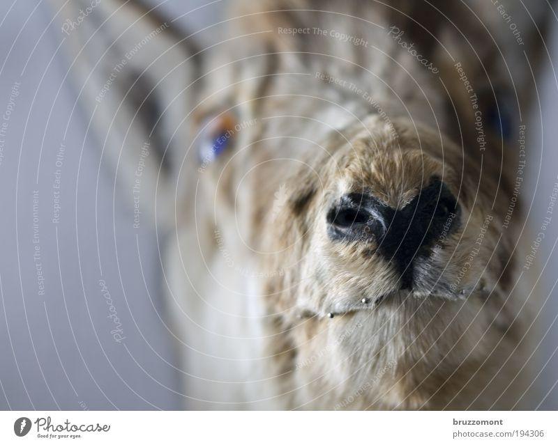 Im Club der Böse Wörter Sager Tier Tod Wohnung Trauer Vergänglichkeit Fell Schmerz Wildtier Jagd Wildfleisch skurril Verbote einrichten Verlierer Lebensmittel