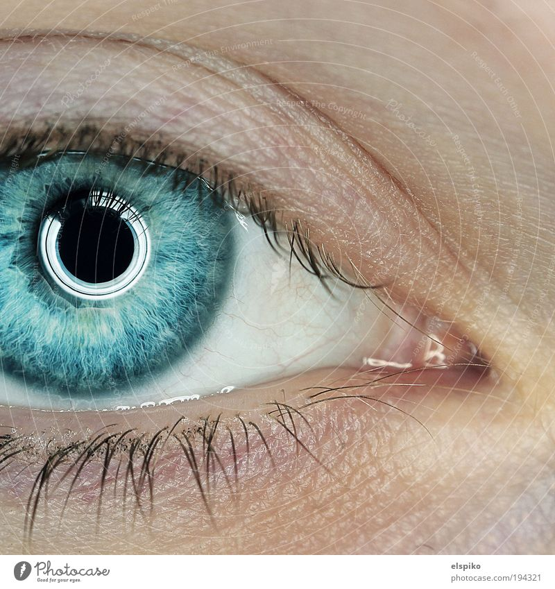 Tiefseetaucher Mensch feminin Junge Frau Jugendliche Erwachsene Haut Kopf Auge 1 18-30 Jahre Blick Blitz Ring Ringblitz Iris blau Tiefe schön wunderschön