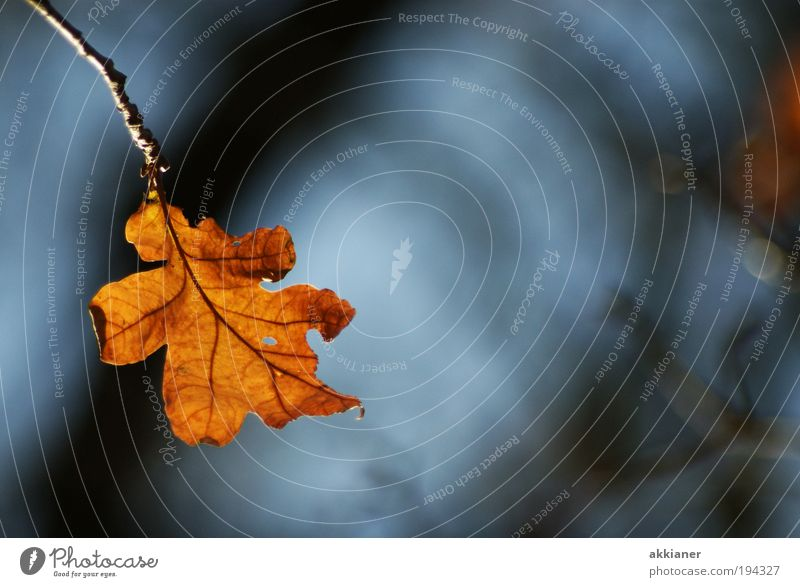 Einsam Natur blau Baum Pflanze Sonne Blatt schwarz Umwelt Landschaft Wärme Herbst Luft hell Park braun Wetter