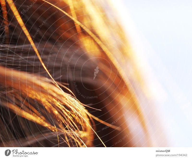 Close. Mensch Sommer Einsamkeit Erholung Wärme Gefühle Haare & Frisuren orange Kindheit Wind Freizeit & Hobby außergewöhnlich Behaarung ästhetisch Fell