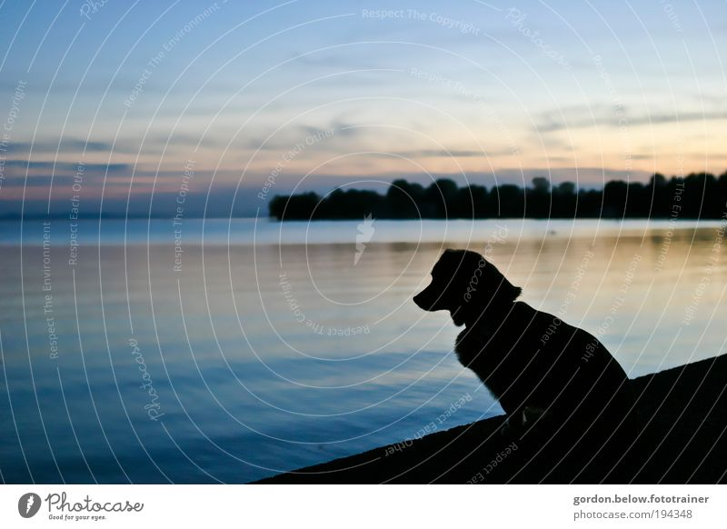 Dog sundown Natur Wasser Ferne Tier Landschaft Hund klein See frei Bucht Seeufer Haustier selbstbewußt