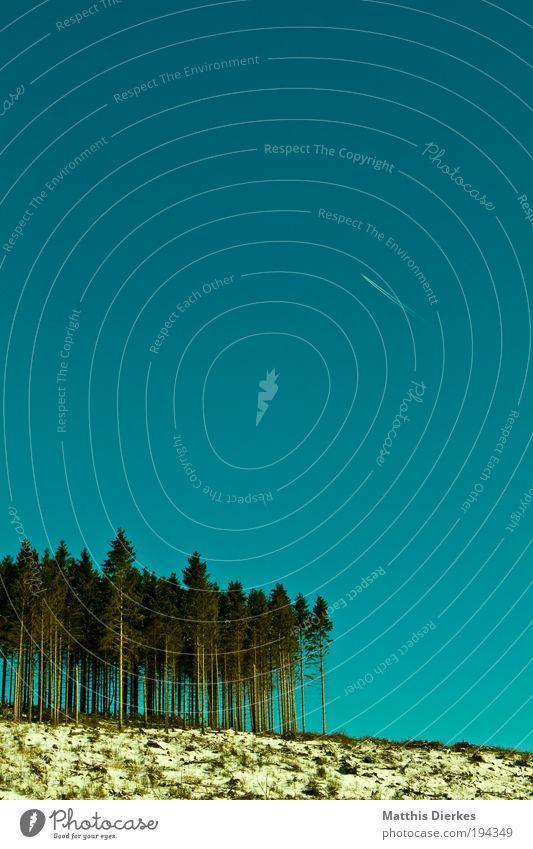 3 Jahre nach Kyrill alt Himmel Baum Winter Wald kalt Wiese Flugzeug Wind Armut trist kaputt dünn Unendlichkeit Urelemente