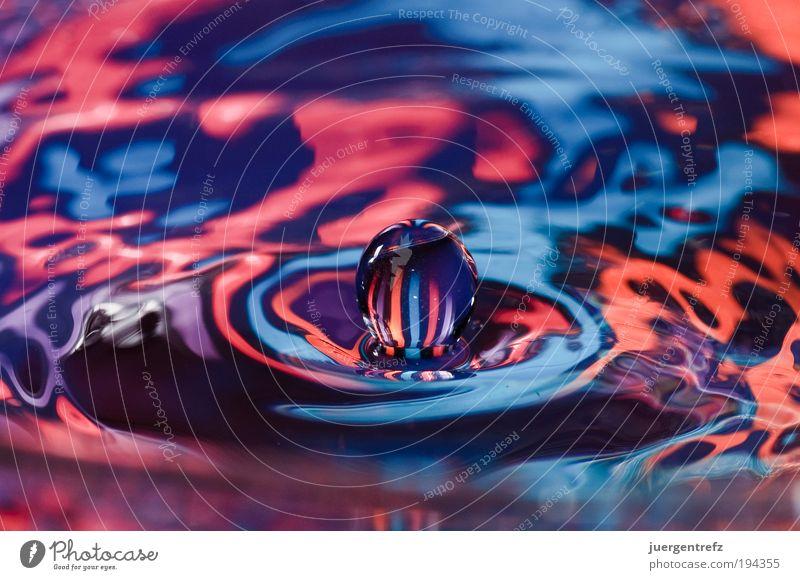 Wasserball Wasser blau rot Farbe Gefühle Bewegung Kraft rosa Tropfen violett einzigartig außergewöhnlich Kugel Idee Makroaufnahme Experiment