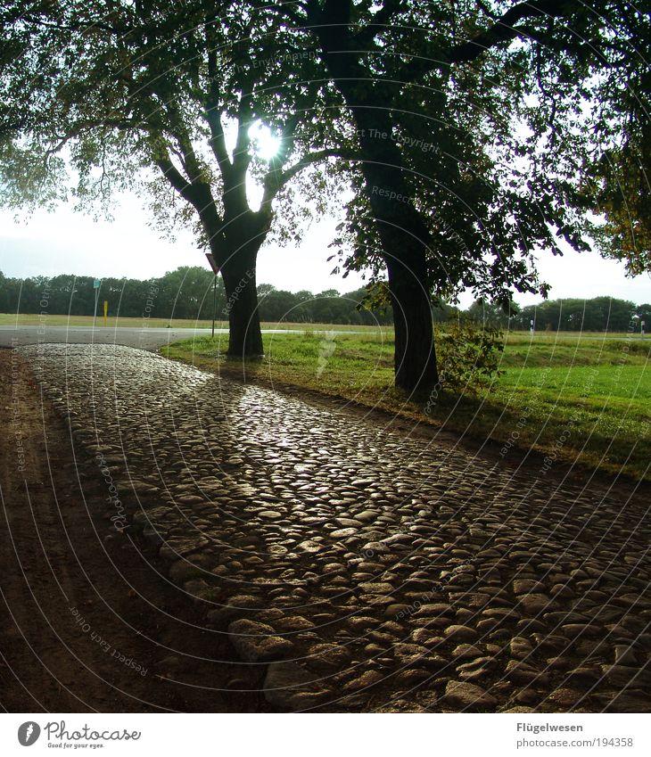 später Nachmittag Natur Himmel Baum Sonne Pflanze Sommer Ferien & Urlaub & Reisen Ferne Straße dunkel Erholung Wiese Freiheit Wege & Pfade Landschaft Umwelt
