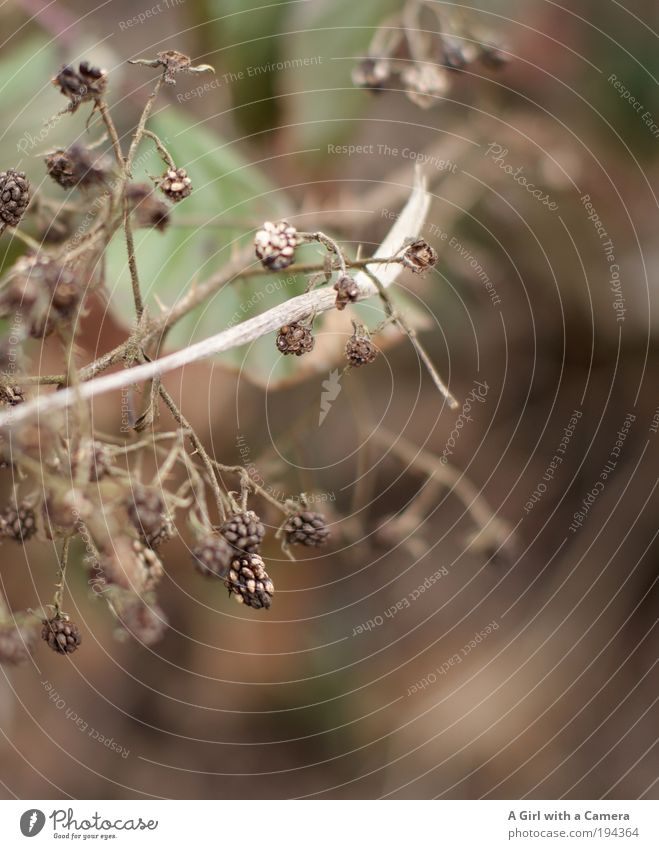 vergessen...... schade Natur alt grün Pflanze Tier Winter Umwelt Tod Herbst Wege & Pfade Traurigkeit braun natürlich warten Sträucher trist