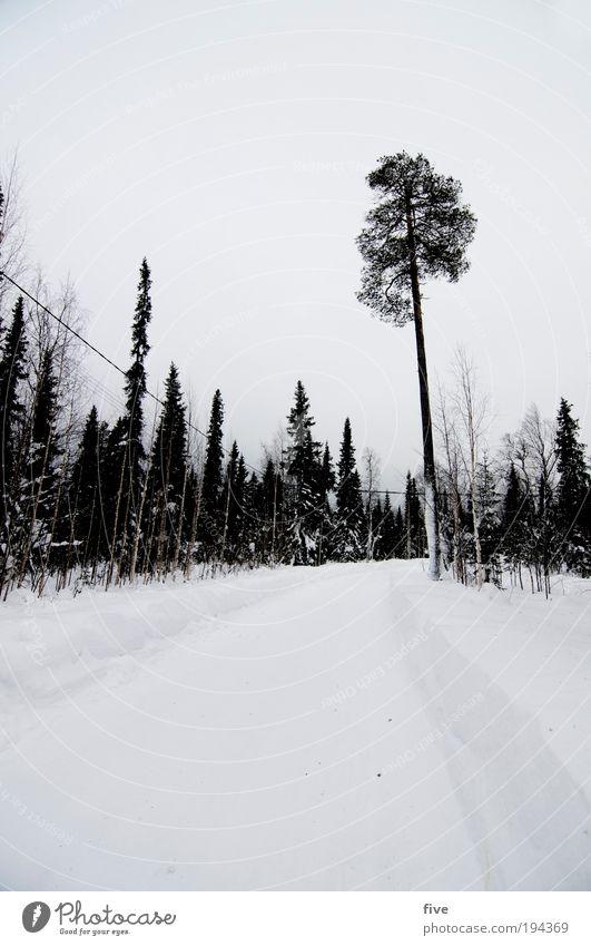 lappische kälte Umwelt Natur Landschaft Himmel Wolken Winter Eis Frost Schnee Pflanze Baum Wald frieren warten Unendlichkeit kalt weiß Lappland Finnland