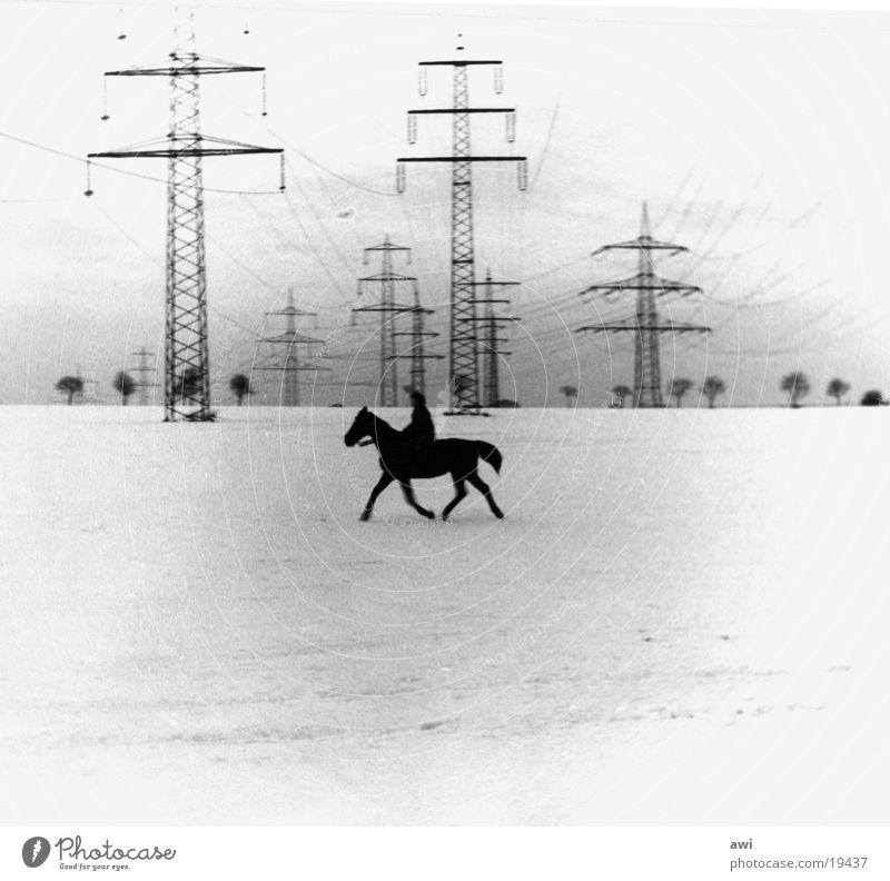 Einsamer Reiter Pferd Feld Strommast Elektrizität Einsamkeit Schnee Schwarzweißfoto