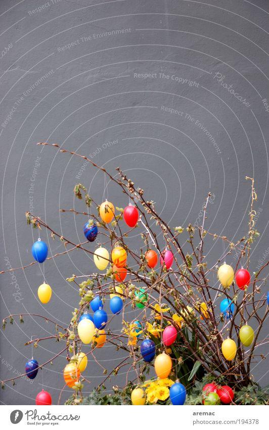 Eierbaum Ostern Pflanze Frühling Sträucher exotisch Haus Mauer Wand Fassade Blühend trendy grau Kitsch Osterei mehrfarbig Farbfoto Außenaufnahme Menschenleer