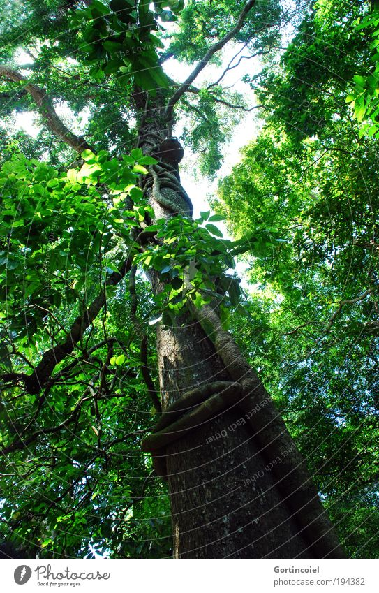 Bali Rainforest Natur Himmel Baum grün Pflanze Sommer Blatt Wald Frühling Luft Umwelt Asien Ast wild Urwald Baumstamm
