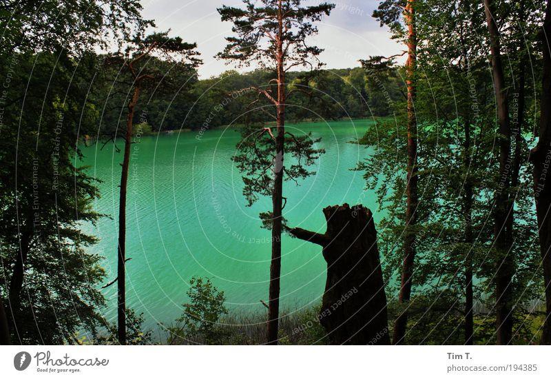 Green Lake Umwelt Natur Landschaft Pflanze Tier Sommer Baum Seeufer Liebnitzsee Romantik grün Wald Wasser Waldsee Farbfoto Außenaufnahme Menschenleer Tag Licht