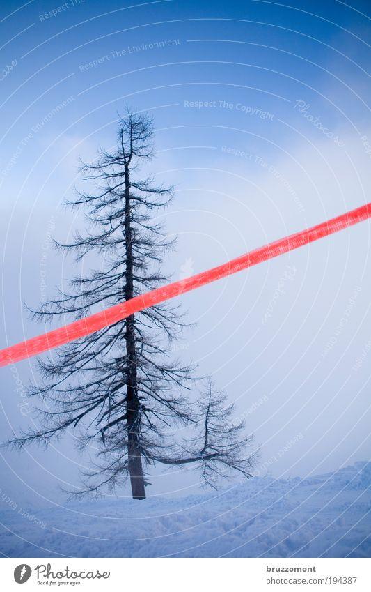 Baumgrenze Natur schön blau Pflanze rot Winter Wolken Einsamkeit Schnee Berge u. Gebirge Nebel Barriere Verbote selbstbewußt