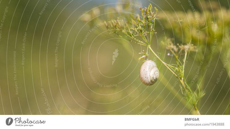 Das hält schon.... Natur Pflanze grün Landschaft Erholung Tier ruhig Umwelt Wiese Gras Garten Park authentisch Kreativität Sträucher harmonisch
