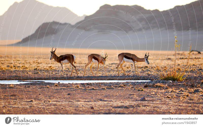 Am Wasserloch Natur Sommer Landschaft Tier Berge u. Gebirge Freiheit Sand Felsen frei Wildtier Tiergruppe Abenteuer Schönes Wetter Hügel Unendlichkeit