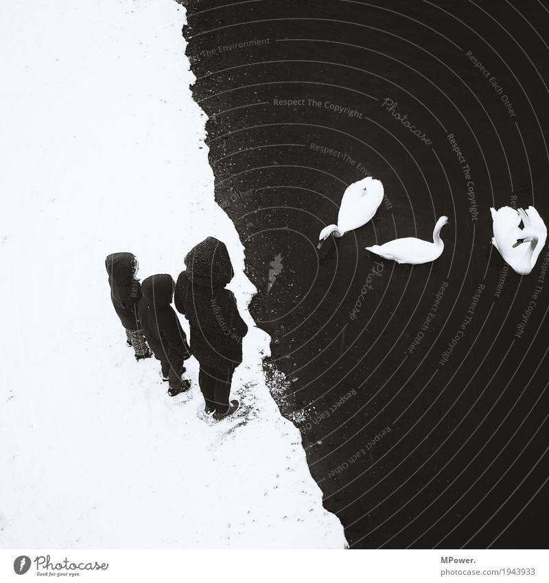 schwarz zu weiß Mensch Kind Frau schön weiß Tier ruhig Erwachsene kalt Gefühle Schnee Menschengruppe Flügel Tiergruppe Fluss geheimnisvoll
