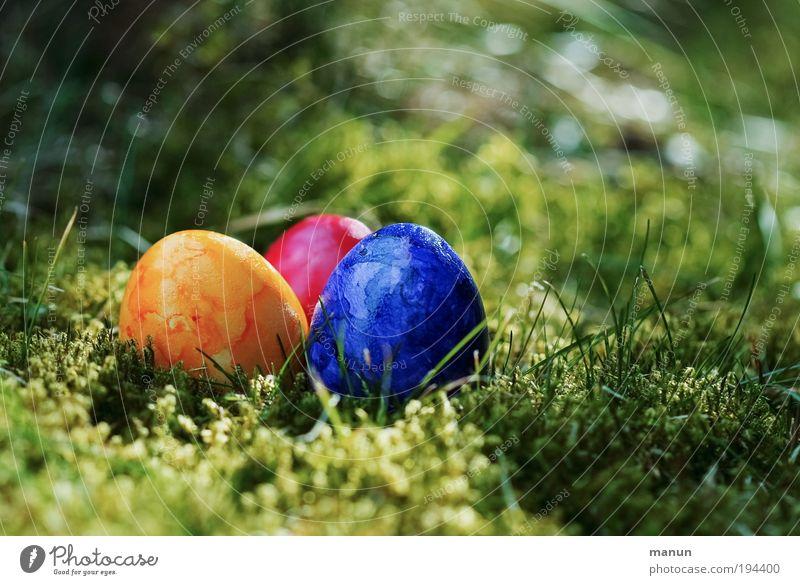 OOO Freude Frühling Wiese Lifestyle Garten Feste & Feiern Lebensmittel frisch Ernährung Fröhlichkeit Lebensfreude Kultur Zeichen Neugier Ostern Glaube