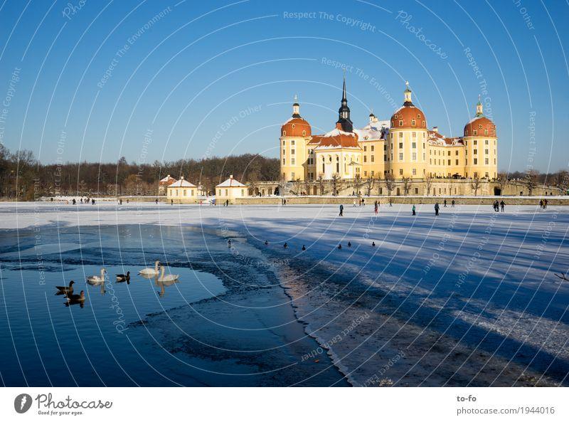 Moritzburg Architektur bevölkert Burg oder Schloss Park Bauwerk Gebäude Sehenswürdigkeit Wahrzeichen Schloss Moritzburg historisch reich