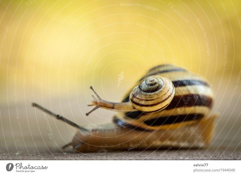 Nur Kriechgang? Natur Sommer Tier gelb Frühling Bewegung Garten braun oben Wildtier Geschwindigkeit niedlich berühren Ziel Team Symbole & Metaphern