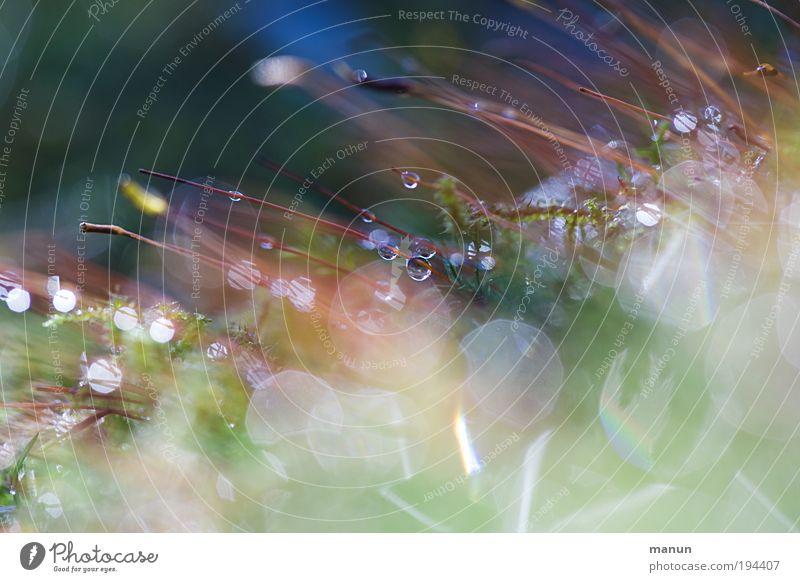 Morgentau Natur Pflanze Sommer Erholung Traurigkeit Herbst Frühling Wiese natürlich Feste & Feiern Regen glänzend frisch Wassertropfen nass Sauberkeit