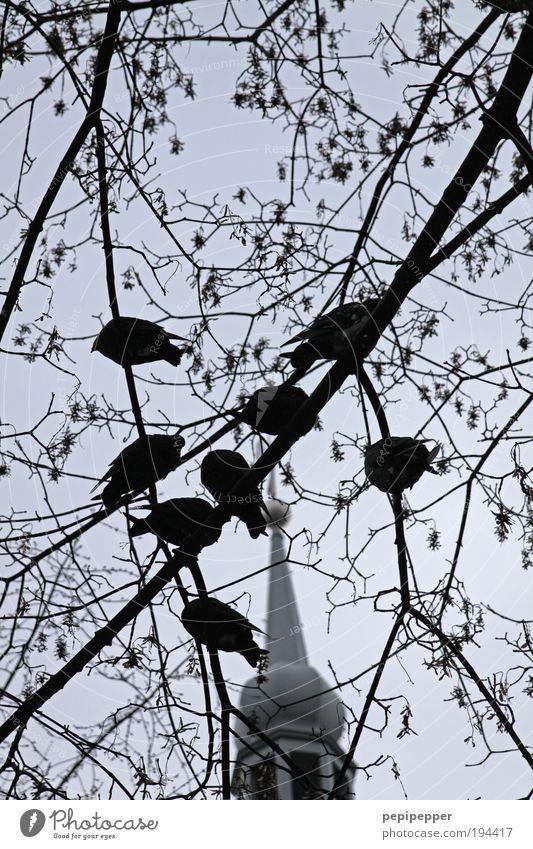 taube Tauben Baum Garten Kirche Dach Tier Vogel Tiergruppe füttern Schwarzweißfoto Außenaufnahme Morgendämmerung Kontrast Schwache Tiefenschärfe