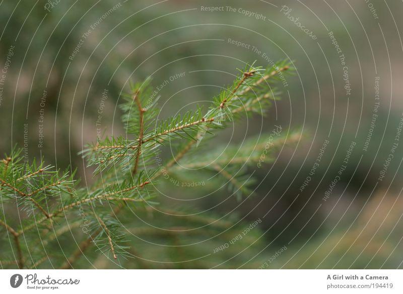 Immergrün Natur grün Baum Pflanze Tier Umwelt Frühling Glück träumen Stimmung Zufriedenheit natürlich warten Wachstum frisch authentisch