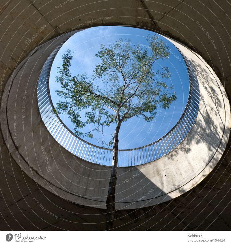 Last Exit Baum Einsamkeit Herbst Holz Architektur Beton Design Europa Management Mut Terrasse Österreich Surrealismus Hauptstadt Platzangst