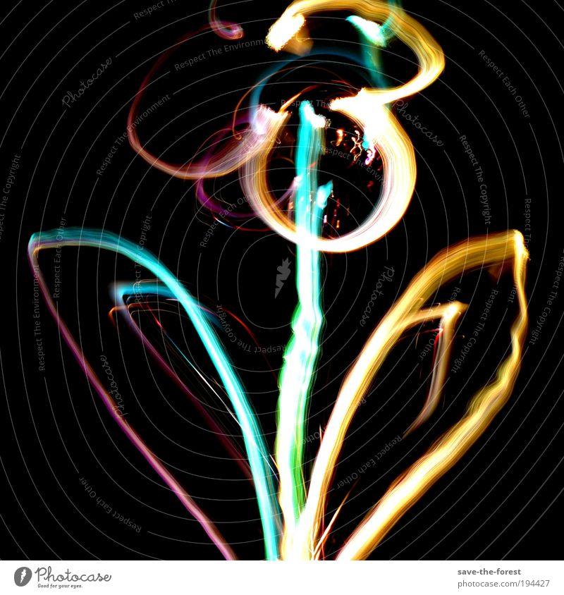 Floral glow Blume Blüte Pflanze Licht mehrfarbig Langzeitbelichtung Experiment leuchten dunkel Gemälde Kunstlicht