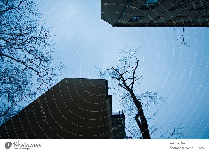Hinterhof alt Am Rand Berlin blau Herbst Jahreszeiten seitenflügel Haus Gebäude Mauer Brandmauer Mieter Vermieter Baum Ast Zweig Blatt Herbstlaub Schatten