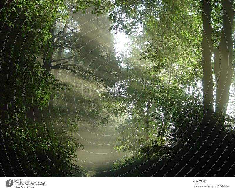 Sonnenschein Wald Nebel