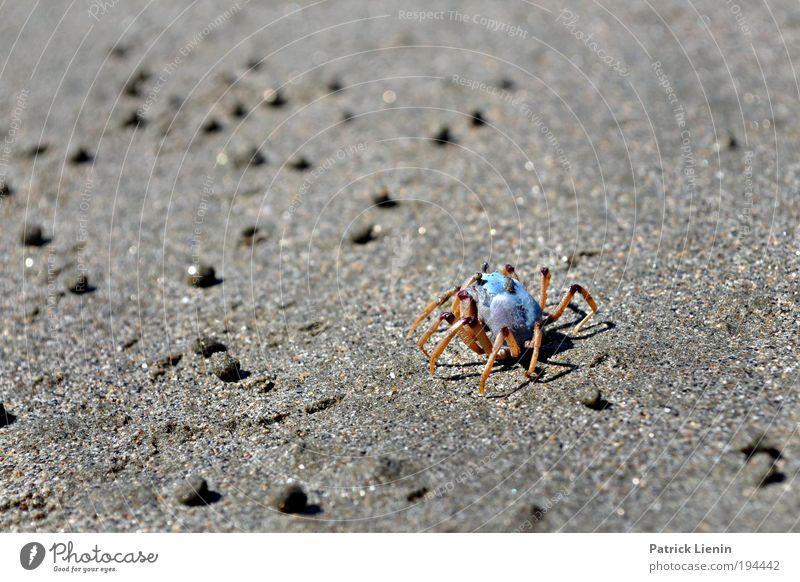 running around the beach Natur blau Meer Strand Tier Umwelt Wärme Stein Küste Beine außergewöhnlich Laufsport Neugier Kugel verstecken Loch