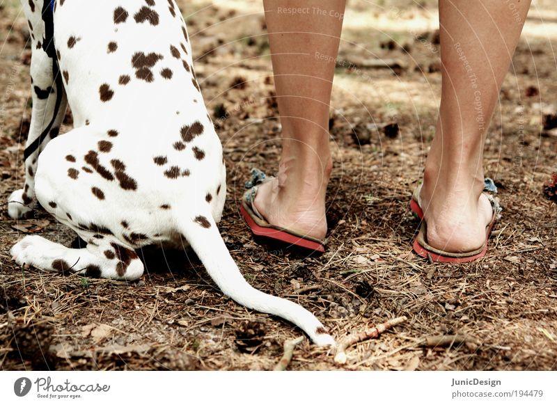 Zusammen Hund Mensch Natur Ferien & Urlaub & Reisen Sommer Tier Fuß braun Zusammensein sitzen frei authentisch stehen niedlich Vertrauen genießen