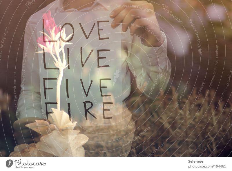 Love ./. Fire Natur Hand Pflanze Blume Blatt Liebe Umwelt Gefühle Gras Blüte Park Klima Arme Schriftzeichen Feuer Hinweisschild