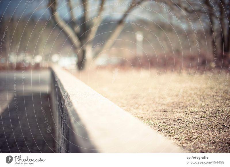 Die eine Mauer Baum Wand Mauer Park Beton Schönes Wetter nah