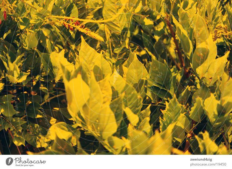 blätterwald Blatt orange Sträucher Urwald