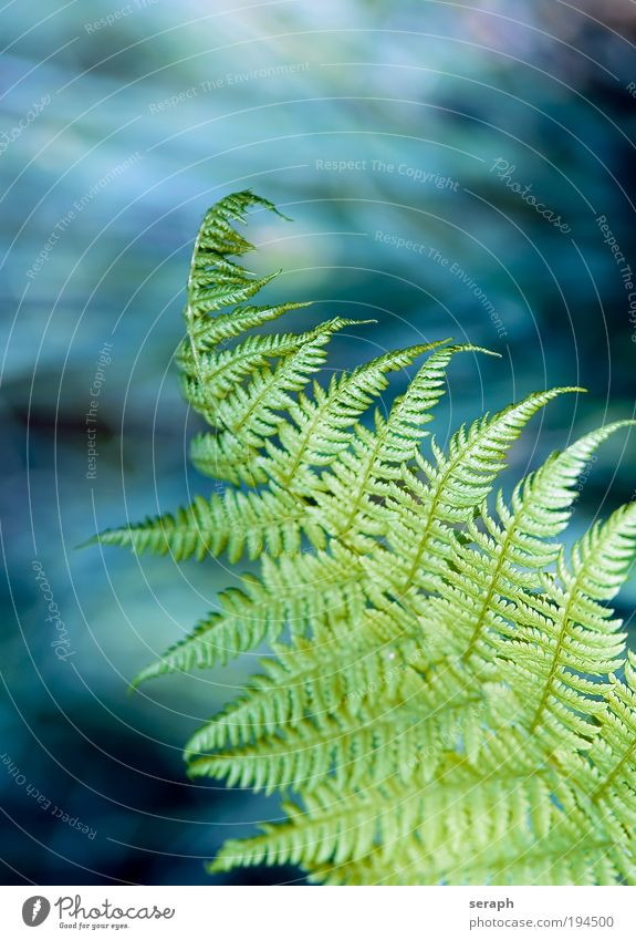 Farnwelt Natur grün blau Pflanze Blatt Finger Wachstum Botanik Hand pflanzlich Echte Farne Mensch Sporen Blattgrün Venen