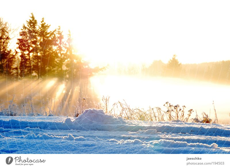 Schmelz ihn weg!! Natur Baum Winter Ferne Wald kalt Schnee Wiese Frühling Glück träumen Wärme Eis Kraft Umwelt Hoffnung