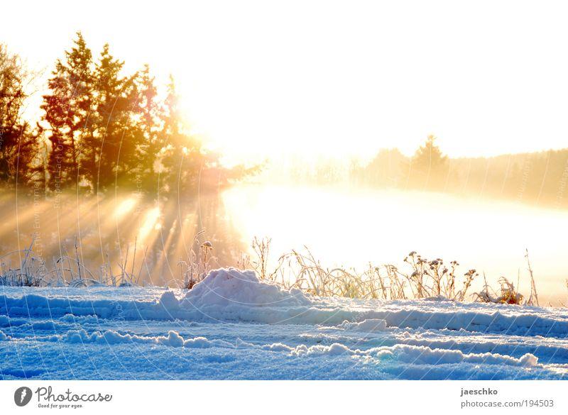 Schmelz ihn weg!! Umwelt Natur Frühling Winter Klimawandel Schönes Wetter Eis Frost Schnee Baum Wiese Wald leuchten kalt positiv Wärme Glück Reinheit Hoffnung